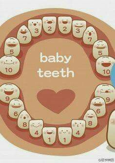 Every Mom must see this!  Ever wonder which baby tooth will be coming next?  Check out this image!  Omni Dental Centre, 1026 Woodbury Ave Council Bluffs, Iowa 51503