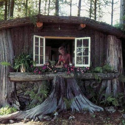 Tree Stump Home Tree Stump Home Using Cedar Stumps That