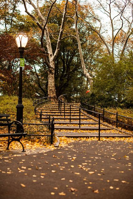 Fall in Central Park, NYC ~ by Rebecca Dale Photography
