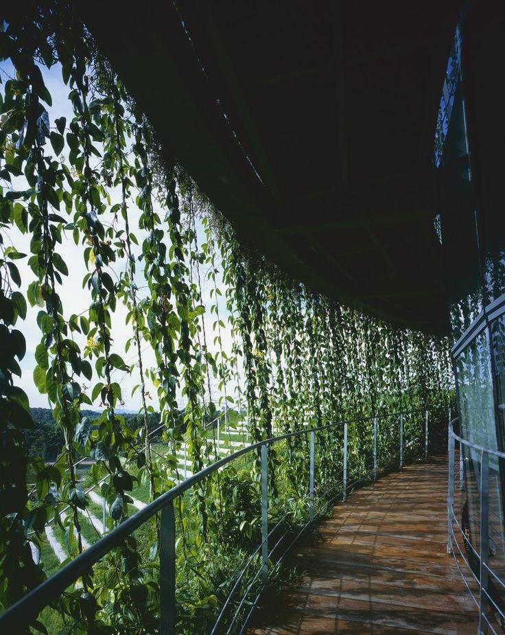 Factory on the Earth   Johor Bahru, Johor, Malaysia   Ryuichi Ashizawa Architect & Associates   photo © Kaori Ichikawa