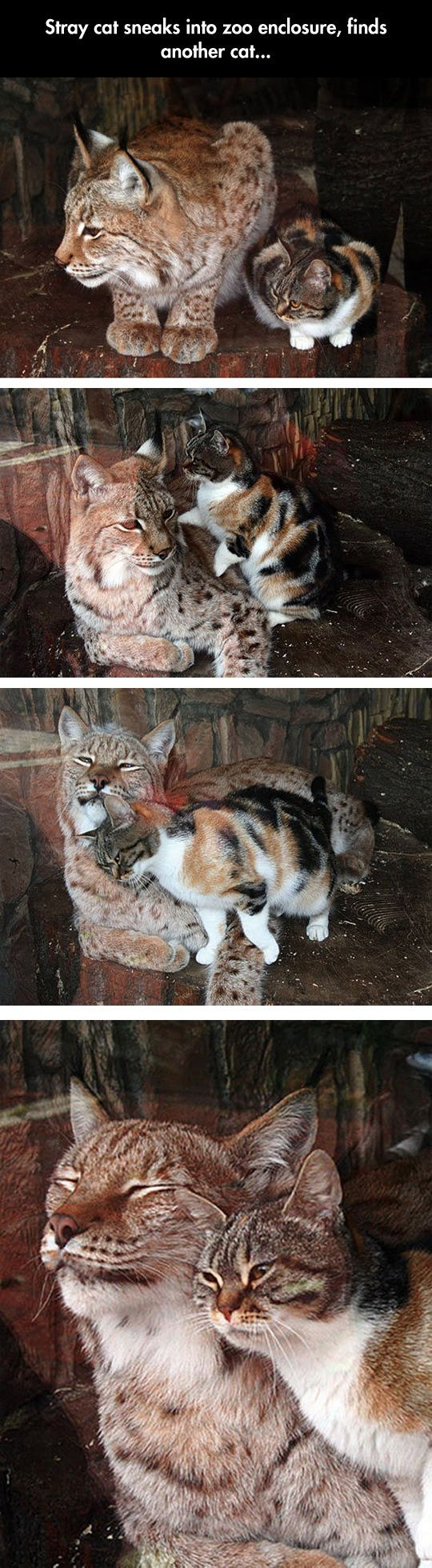 funny-stray-cat-sneaks-zoo
