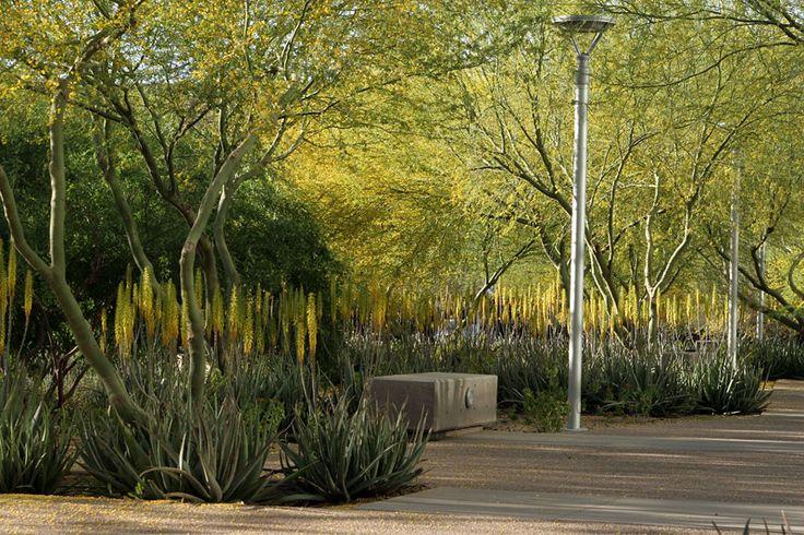 Asu biodesign institute christine ten eyck pinterest for Ten eyck landscape architects