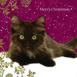 Weihnachtskarte - Christmas Kitten - Merry Christmas-Haustierbedarf-Shop: Goodies für Katzen und Hunde online kaufen