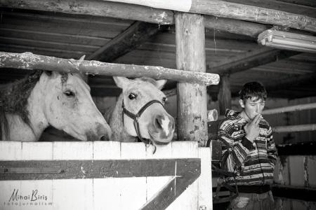 horse farm, Râșnov