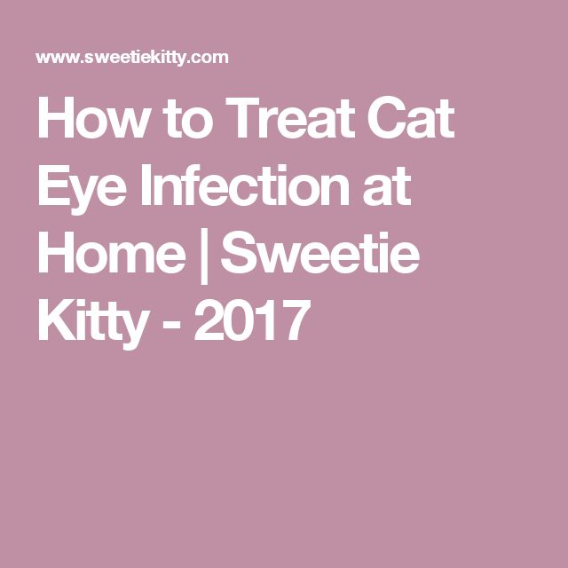 How to Treat Cat Eye Infection at Home | Sweetie Kitty - 2017