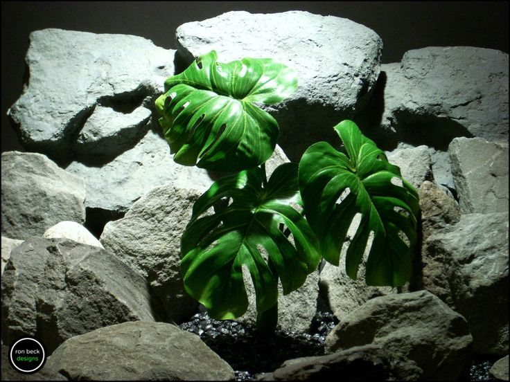 silk reptile plant or terrarium plant: split leaf philodendron from ron beck designs. srp169 by ronbeckdesigns on Etsy. #ronbeckdesigns #gotplants? #aquarium #reptile #plants