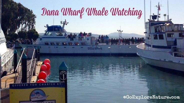 Dana wharf sportfishing and whale watching los angeles for Los angeles fishing charters