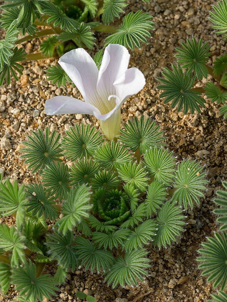 M s de 10 ideas incre bles sobre suculentas variedades en for Cactus cuidados exterior