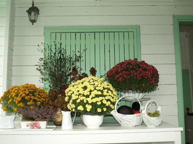 to już jesień ------------ it's autumn already