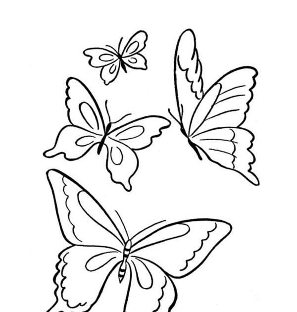 Download Butterfly Four Butterflies Flying On The Park Coloring Page Download To Draw But Butterfly Coloring Page Butterfly Printable Easy Butterfly Drawing