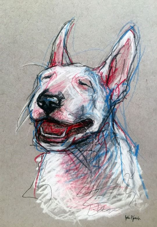 Bull Terrier pet portrait sketch - pencil, colored pencil and ink on paper www.juliepfirsch.com