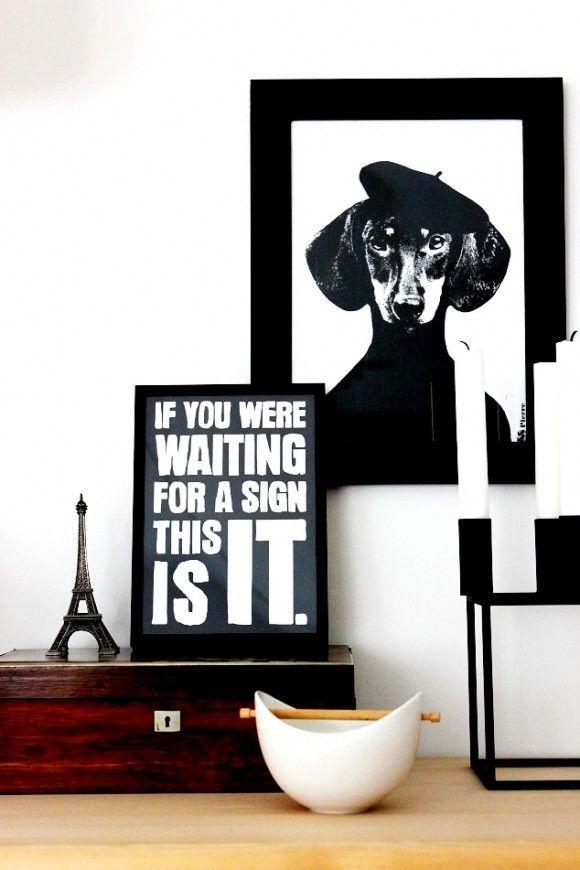 .: Decor, Weenie Dogs, Quotes Boards, Architecture Interiors, Interiors Design, Black White, Dogs Pictures, Wiener Dogs, Art Compo
