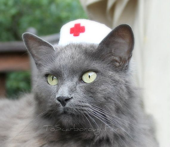 Best Cat Hats Images On Pinterest Cats Chihuahua And Comics - Cat dressed in tiny sailors outfit becomes captain of russian cruise ship