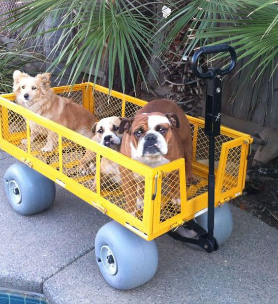 Wheeleez, Inc. Beach Wheels, Boat Dollies, Beach Carts & Mobility Conversion Kits. We offer the best kayak cart available.