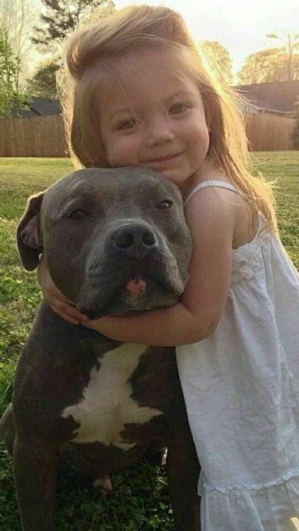 der Pitbull ist unter den liebevollen Hunde Rassen