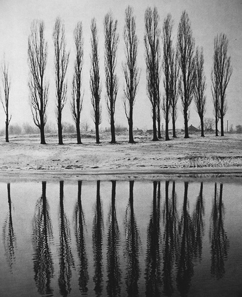 trees: White Photography, Autumn, Beautiful Trees, Trees Hugger, Posts, Image, Simple Black