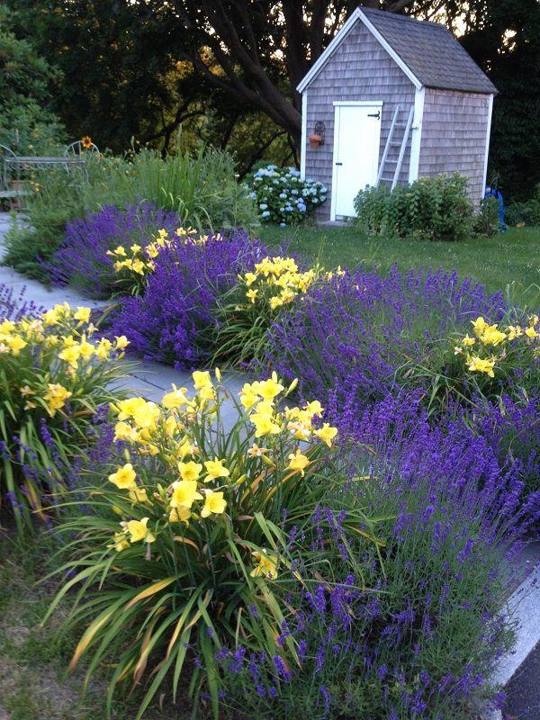 Lavender and daylilies landscaping i love pinterest for Garden design ideas lavender