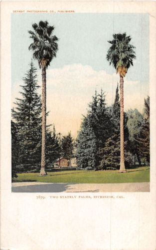 Lot-of-9-Early-Vintage-Riverside-California-Early-1900s-Postcards-41177