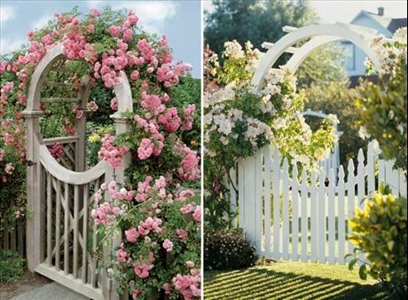 Romantiska djupa rosenbågar över grinden