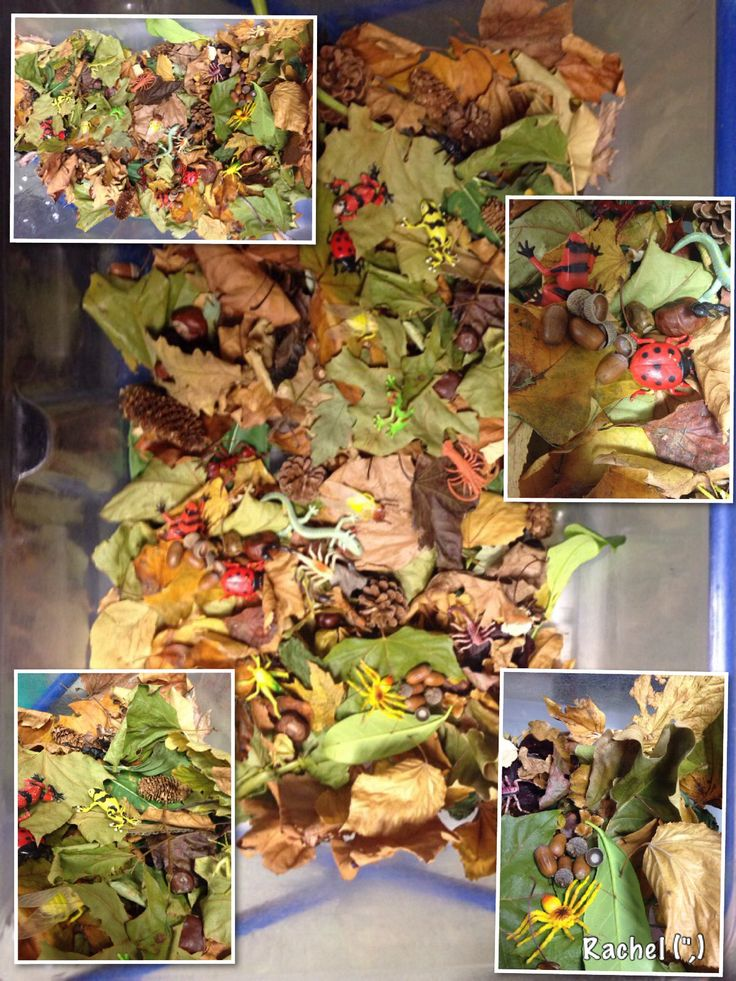 """Autumn leaves & bugs in the water tray - from Rachel ("""",)  We are beginning to see an emerging interest in insects and spiders...Perhaps this will help fan the spark."""