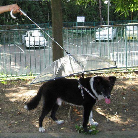 Umbrella Coverage And Dog Breeds