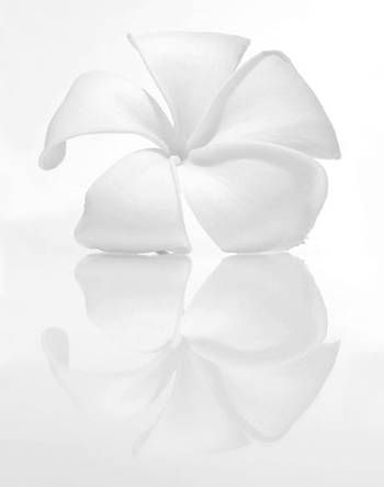 """Plumeria"" Photography by Monica & Michael Sweet at Maui Hands"