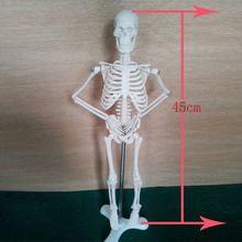 Горячая 45 см мини скелет модель, человеческий скелет модель(China (Mainland))