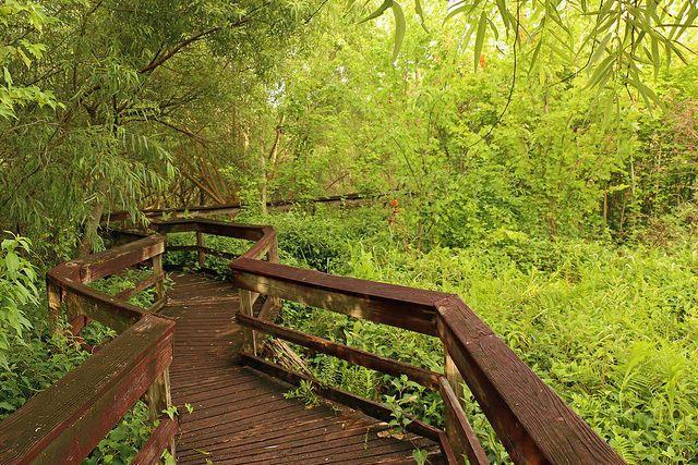 Take a stroll along a quiet boardwalk.