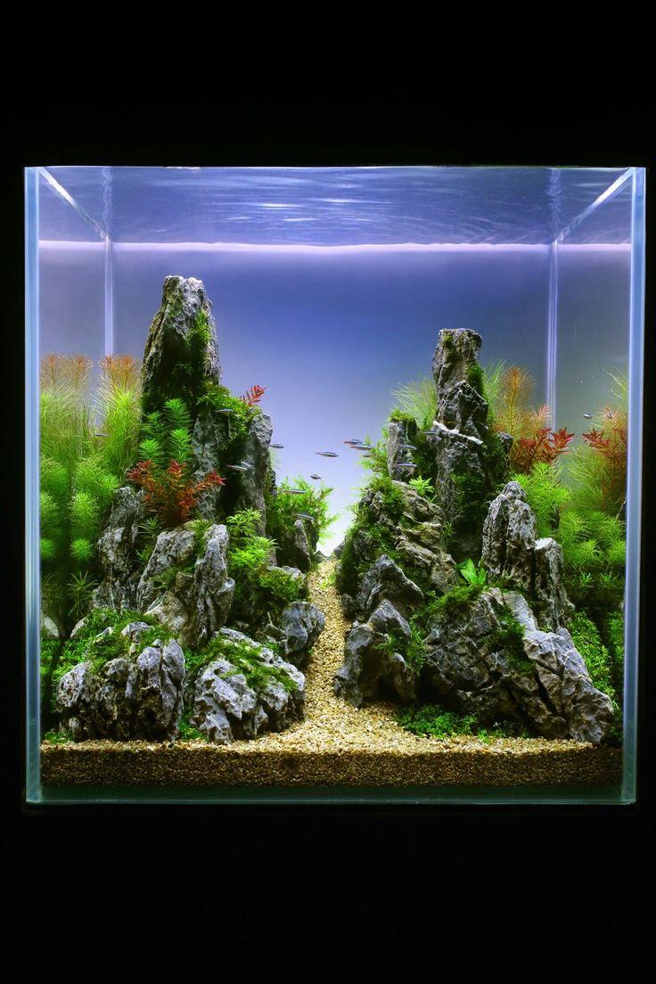 Fish aquarium in chandigarh - 413 Best Images About Aquascaping Aquariums On Pinterest Saltwater Fish Tanks Aquascaping And Vivarium