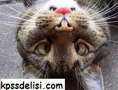 En Komik Resimlerden komik resimler, güldüren fotoğraflar, en komik fotoğraflar, ilginç fotoğraf, komik foto, komik hayvan, komik bebek resimleri, dünyanın en komik resmi benzeri konulardaki en komik resimleri ni sizler için derledik, birbirinden komik resimlere aşağıdan ulaşabilirsiniz. #funny  http://kpssdelisi.com/en-komik-resimler/