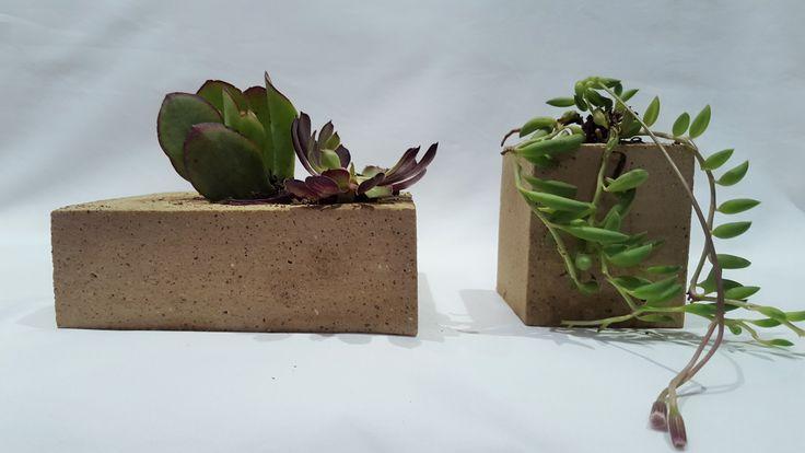 Concrete planters, succulents