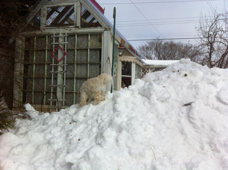 Climbing the huge snowbank in mid April in our back yard. 2013