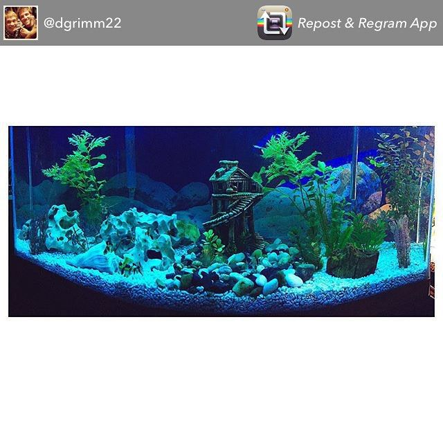 Congrats on the new freshwater setup @dgrimm22 ! Thanks for sharing your tank with us. #freshwatertanks #fwfishgeekgrandrapids #showusyourtanks