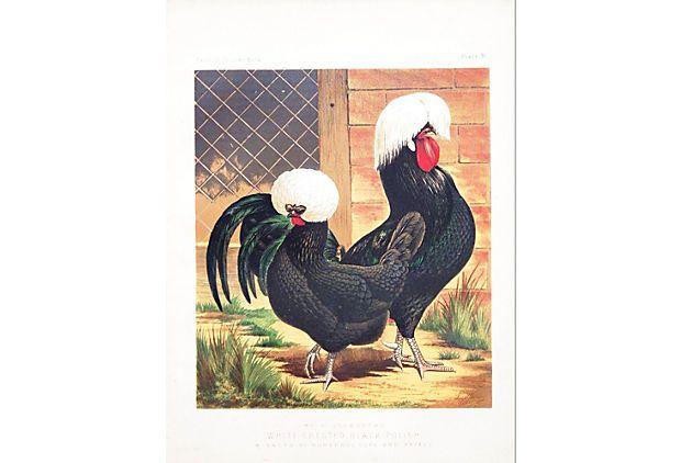 White-Crested Black Polish Chickens on OneKingsLane.com
