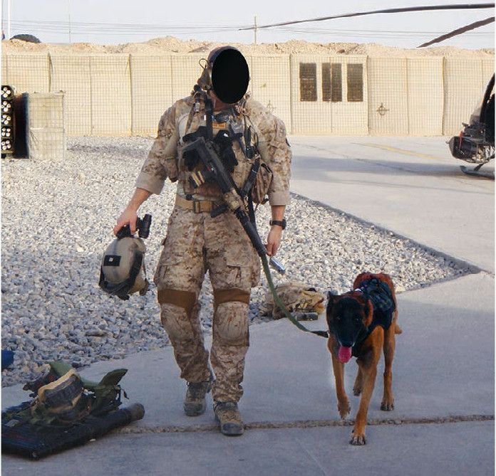 17 Best images about Military working dog on Pinterest | Service ...