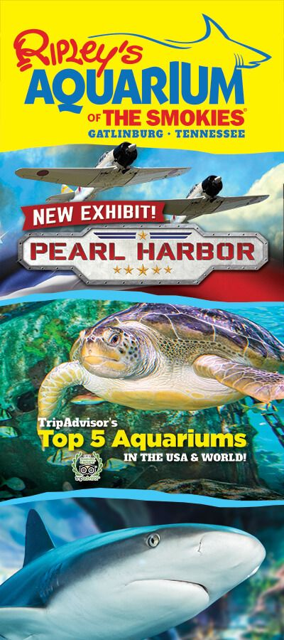 17 Best Images About Ripley 39 S Aquarium Of The Smokies On