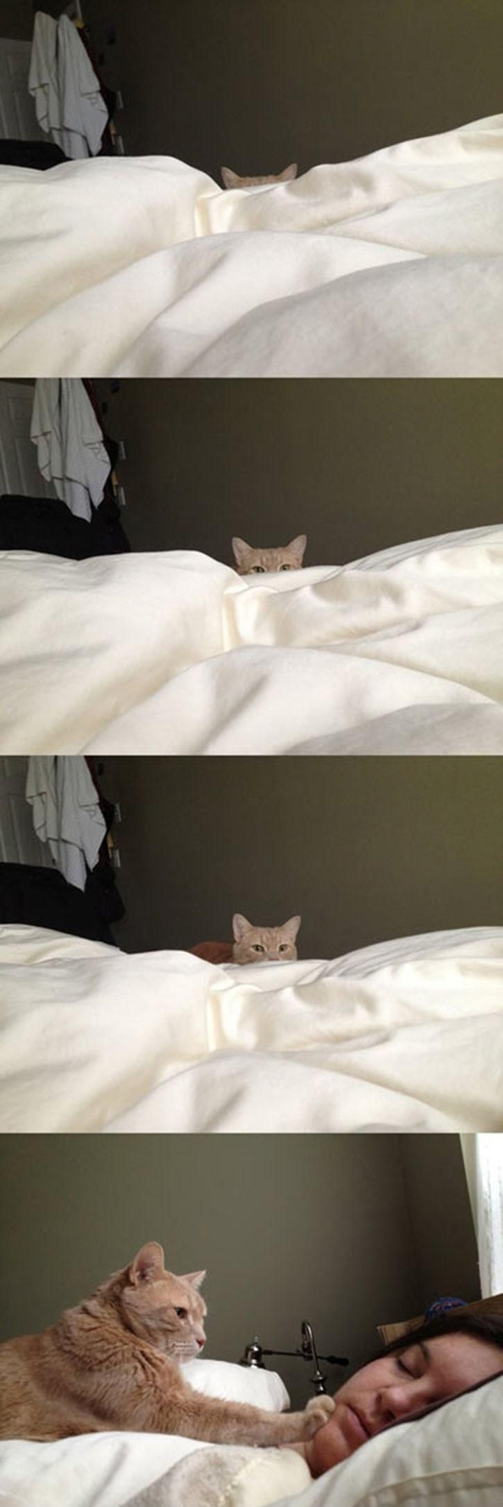 How cat people wake up....exactly