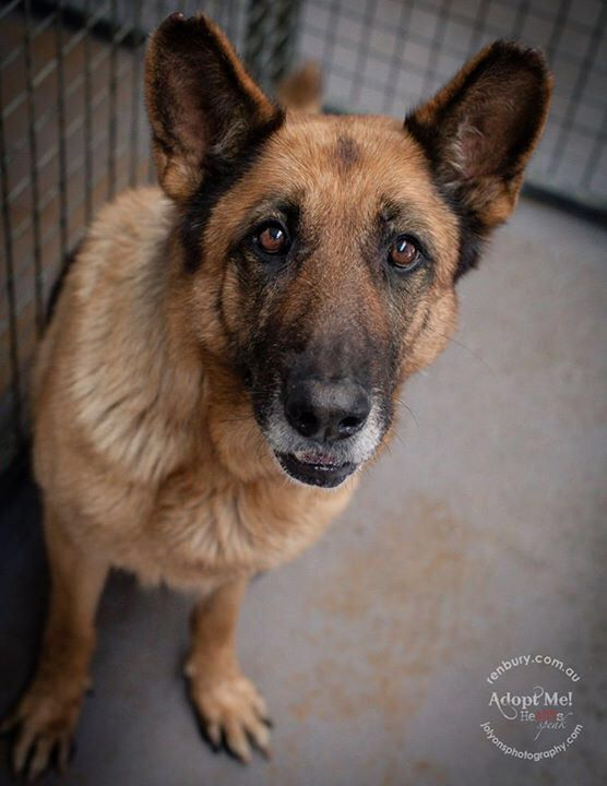 This beautiful senior girl named Thunder was surrendered to Renbury Farm Animal Shelter during the week. She's 8 years old and is a very sweet girl who is seeking a loving home to live out her twilight years \u003C3