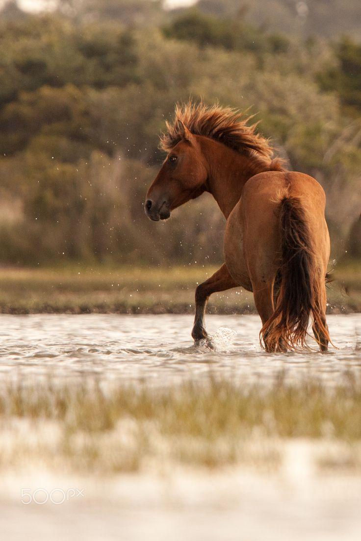 best images about Horses on Pinterest Icelandic horse