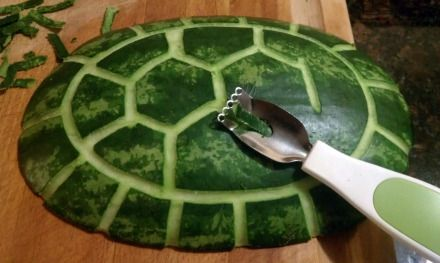 Watermelon turtle shell