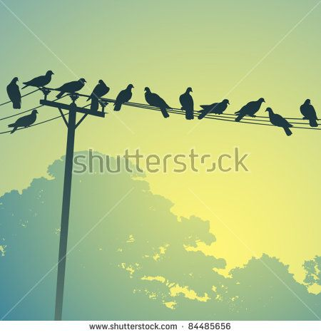 Lots of Birds on Telephone Lines