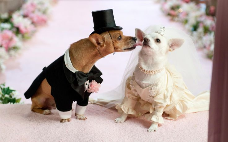 Dog Wedding, Cuteness :) #DogLovers