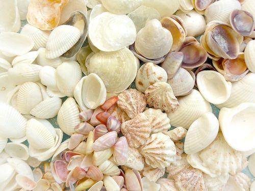 Sanibel Island Hotels: 1000+ Images About Sanibel Seashells On Pinterest