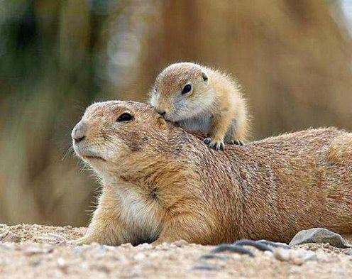 Groundhog Day. Get to know it! (Urban Legends)