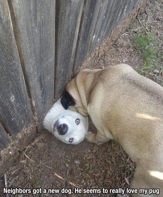 Hiddee ho, neighbor!