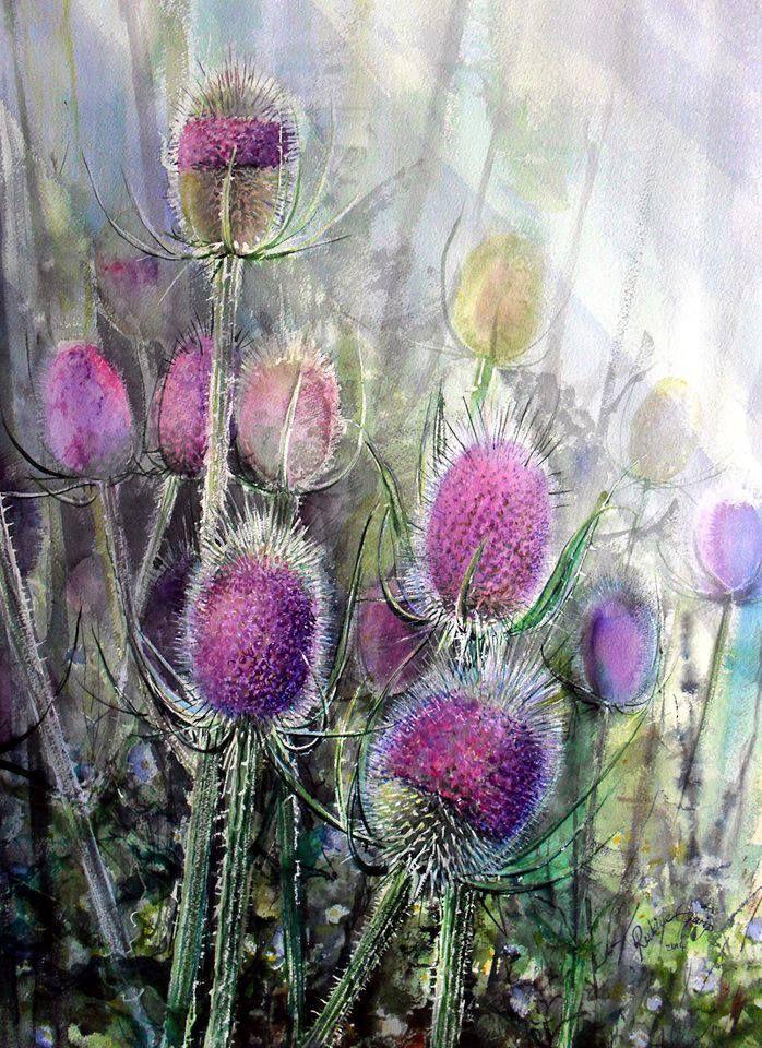 Teasel-5 Watercolor by Rukiye Garip  56 x76 cm Arches 300 gr Rough https://www.facebook.com/rukiyegaripresimatolyesi