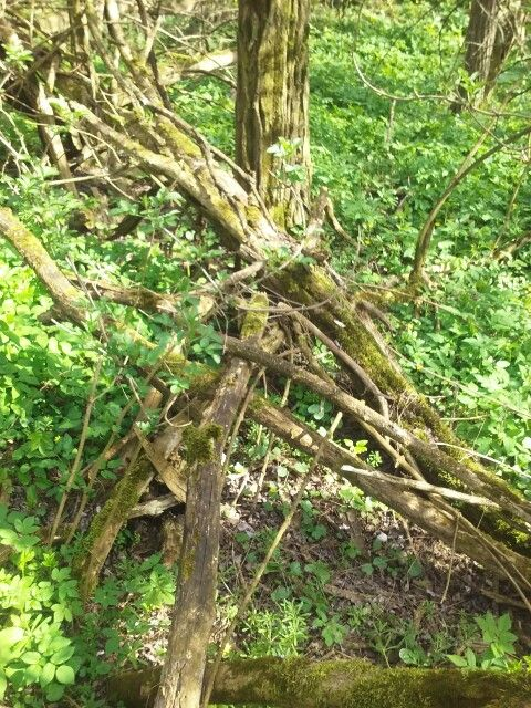 Fallen Wood
