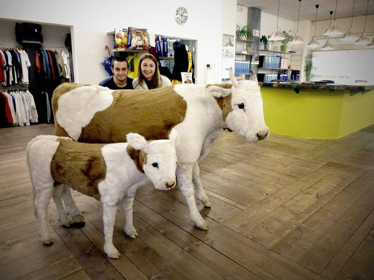 Inside Sadesign #showroom #tour #cow #stuff #fun #work #gadget #merchandise Visit it live at: http://bit.ly/inside-sade