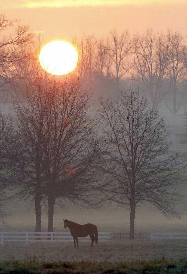 Sunrise on the Calumet Farm, Lexington, Kentucky. Yep they actually look like this every morning :)