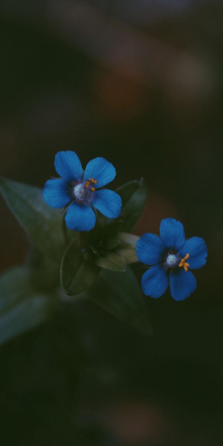 Bleu Fleurs Aux Couleurs Vives Paire 1080x2160 Wallpaper Flowers Wallpapers 1080x2160 Aux Fond Decran Fleur Papier Peint A Fleurs Tournesols Papier